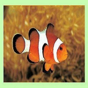 Clownfish for Skype 3.81 + Portable [Multi/Ru]